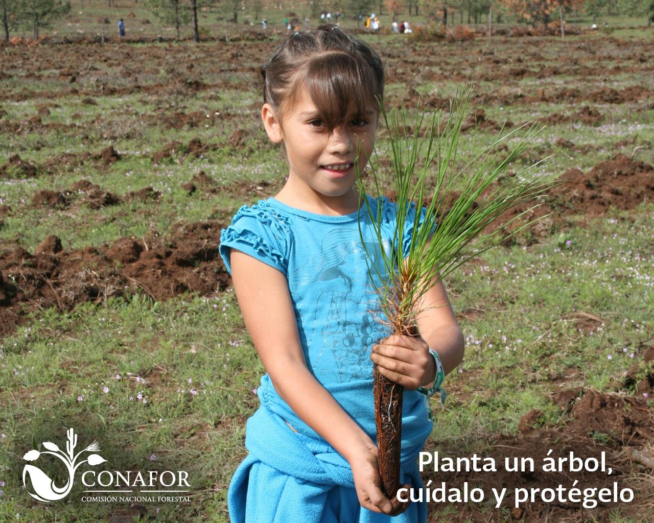 Planta un rbol cu dalo y prot gelo campa a for Viveros forestales conafor