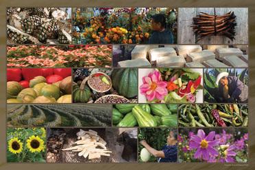 México: centro de origen y diversidad de plantas cultivadas