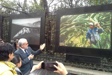 Concurso Foto Mosaico Natura, Rejas del Bosque de Chapultepec.