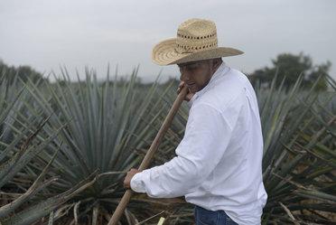 Día del Trabajador Agrícola