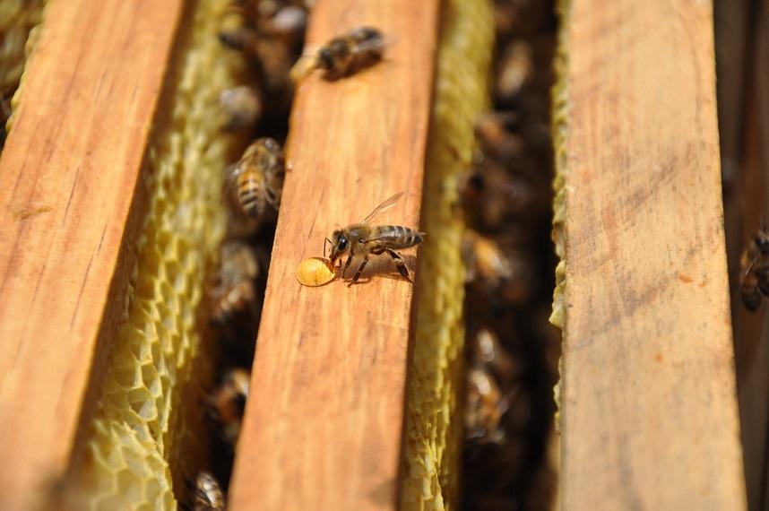 Abeja parada a lado de una miel