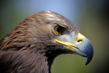 Aguila Real referencia obligada en la historia del pueblo mexicano.