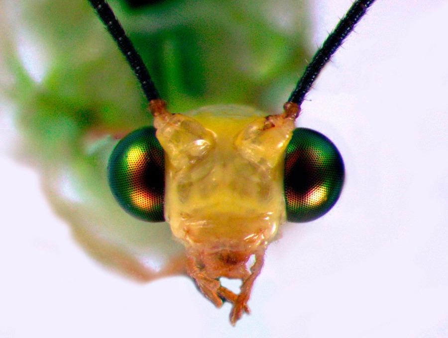 El SENASICA cuenta con una variedad de insectos de colección que ayudan a combatir las plagas cuarentenarias que afectan a los alimentos que consumimos