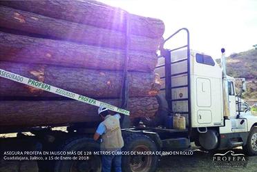 Para inhibir y contener la tala clandestina, la PROFEPA  lleva a cabo el Programa de Combate a la Tala Clandestina a nivel nacional, mediante acciones operativas con resultados cualitativos y de alto impacto en las 108 zonas críticas forestales.