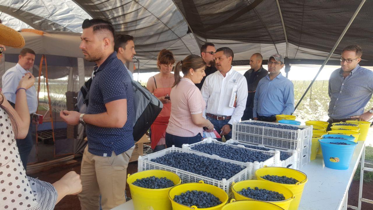 Productos Frescos, Fruta del bosque berries.