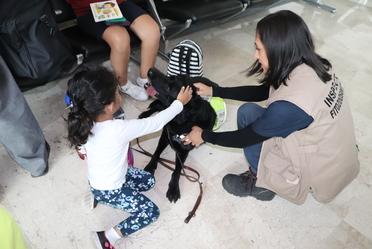 Niñas y niños conviven con personal de SENASICA y conocen el trabajo que realizan los binomios en el aeropuerto