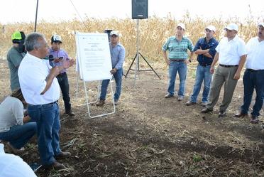 Entregan a productores de Yucatán 200 toneladas de semilla de maíz Sac Beh y Chichén Itzá