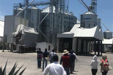Supervisa comisión de China establecimientos productores de sorgo en tres estados de la República mexicana