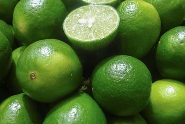El SENASICA opera en México la Campaña contra el Virus de la Tristeza de los Cítricos con el fin de controlar la enfermedad