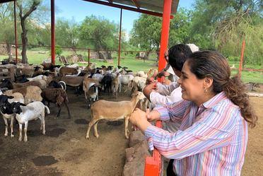 Dra. Narcedalia observando un corral con cabras