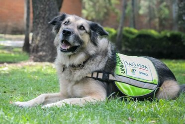 Binomios caninos del SENASICA, ejemplo de trabajo y dedicación en pos de la seguridad alimentaria