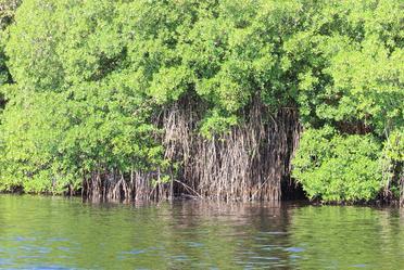 Paisaje de manglar en Campeche.