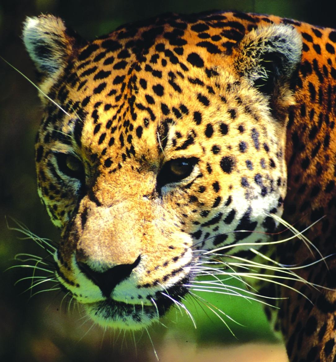 El Día Mundial de los Animales busca transmitir el respeto y cuidado de los animales con el propósito de mantener una buena calidad de vida para los habitantes del planeta