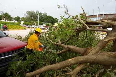 Combatiente  cortando ramas de árboles que obstruyen vialidad en Nayarit.