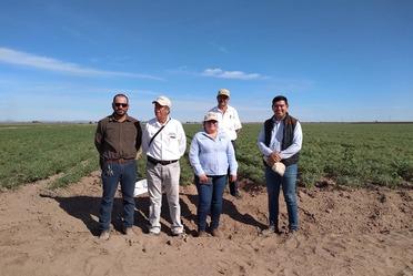 Se está evaluando irrigación, nuevas variedades y líneas experimentales, nutrición del garbanzo, generación de aplicaciones sobre alertas fitosanitarias, entre otros aspectos.