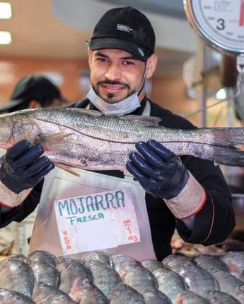 Garantizado el abasto de pescados y mariscos durante la Cuaresma 2019: Conapesca