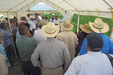 Se mostró producción de soya, maíz en agricultura de conservación, chile serrano y habanero, así como sorgo, entre otras tecnologías que productores pudieron constatar