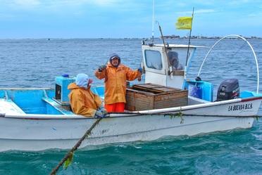 La pesquería de la langosta se realiza principalmente en BC y BCS; ambas entidades aportan el 68 por ciento de la producción nacional.