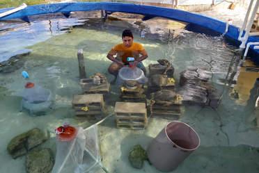 Personal inspeccionando la reproducción de corales,