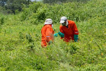 Personal inspeccionando los cultivos.