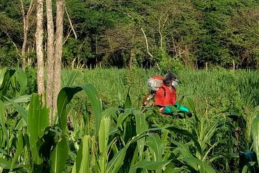Personal fumigando los cultivos