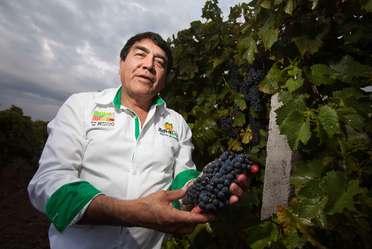 Productor de uva sosteniendo un racimo en sus manos