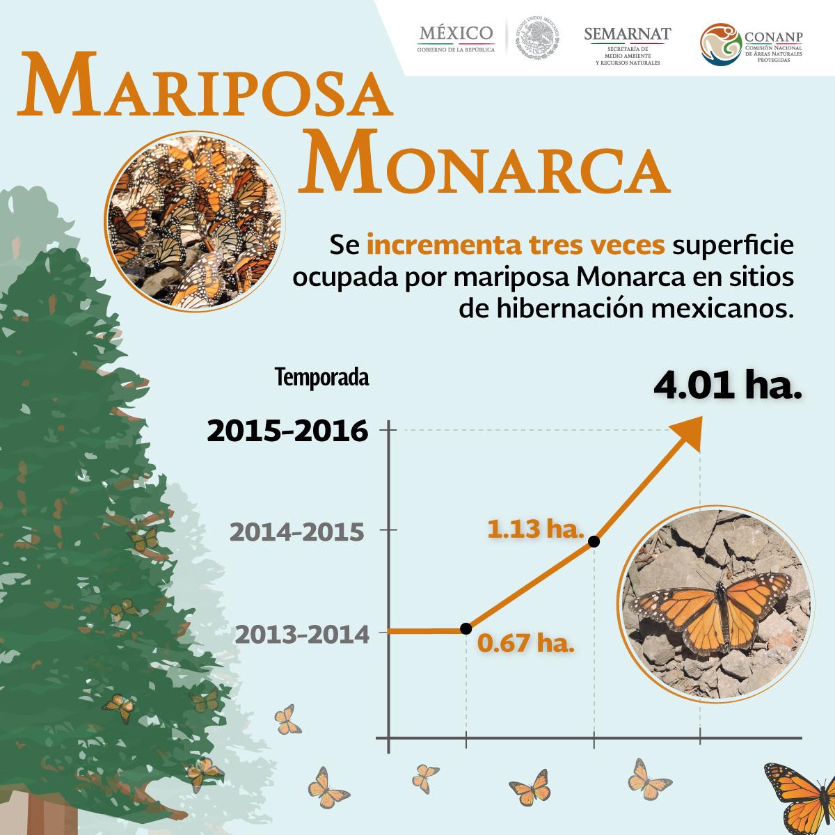 mariposa monarca infografia FINALjpg