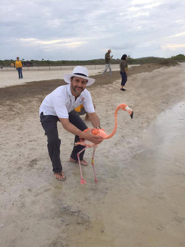 Alejandro Del Mazo Maza menciono  que continuara  con el Programa de anillamiento del flamenco rosa en la Reserva de la Biosfera Ri a Lagartos.jpg