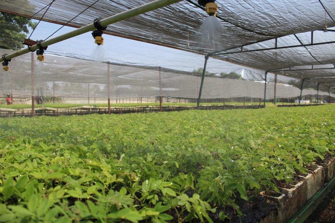 Destinan 2 2 millones de plantas para reforestaci n en for Viveros en colima