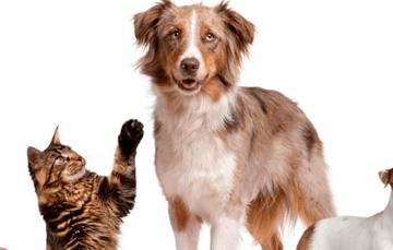 /cms/uploads/image/file/170857/mascotas-blog-int.jpg