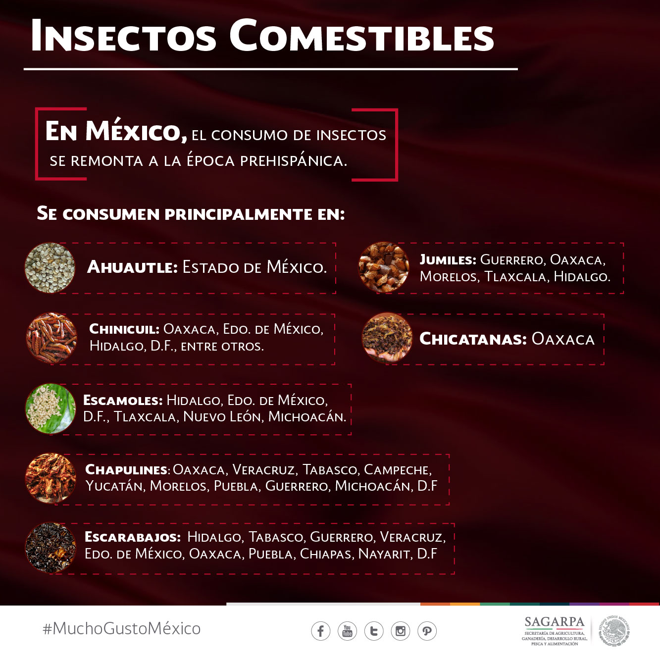 Insectos comestibles 01