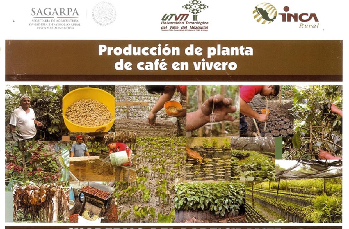 Productores de c fe de m s de 300 viveros se capacitan for Viveros en osorno