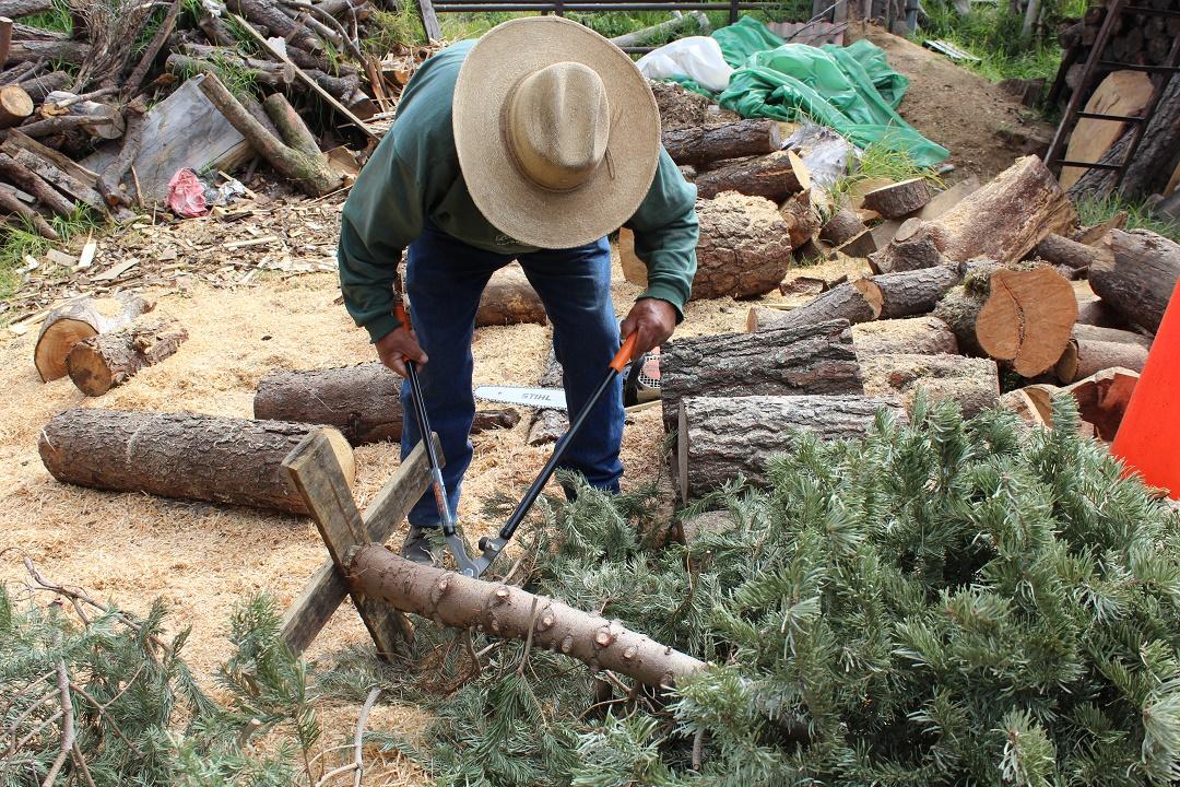 Artesanos que transforman la Navidad | Comisión Nacional Forestal ...
