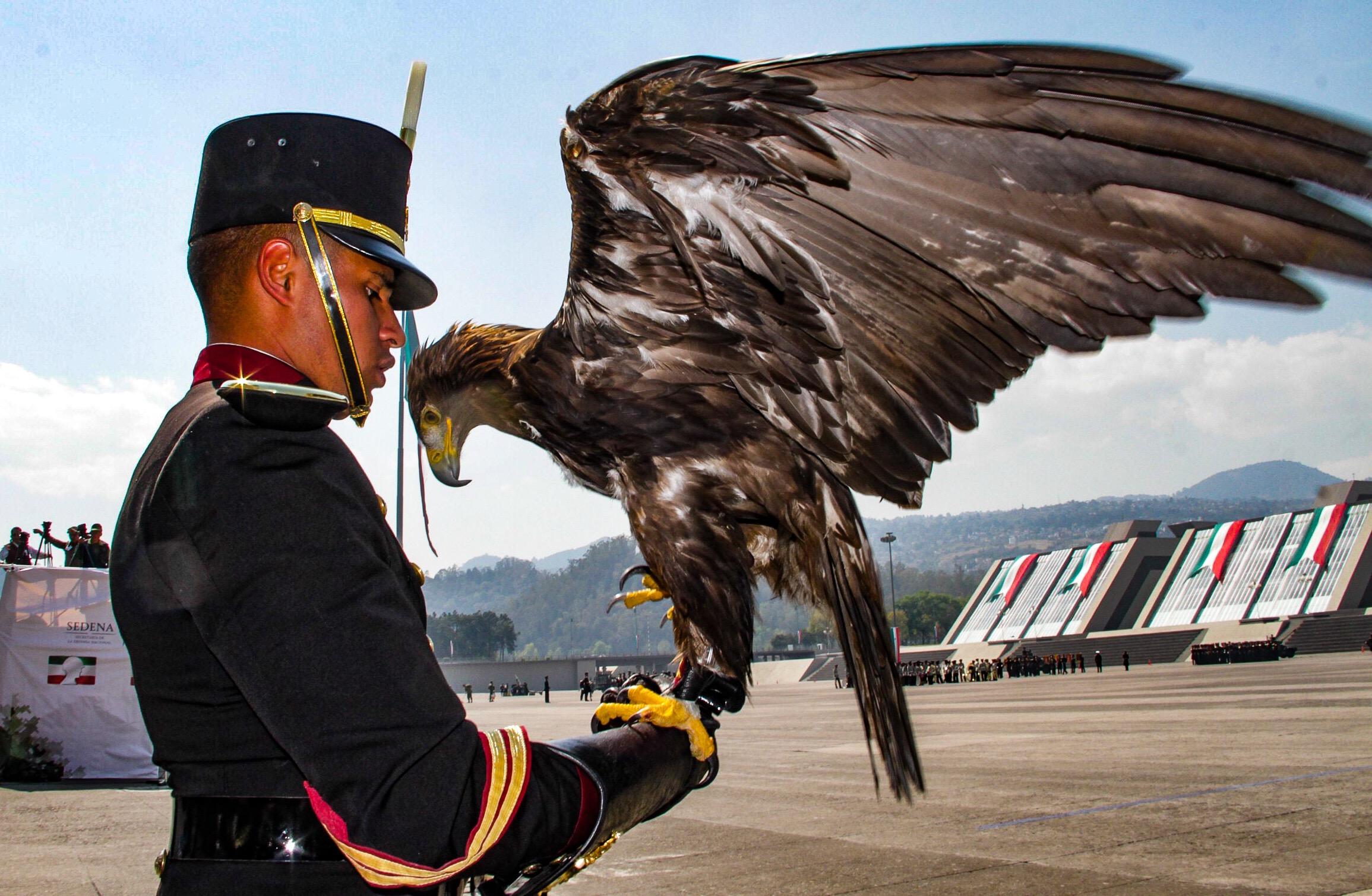 Águila real, símbolo y compromiso | Secretaría de Medio Ambiente y ...
