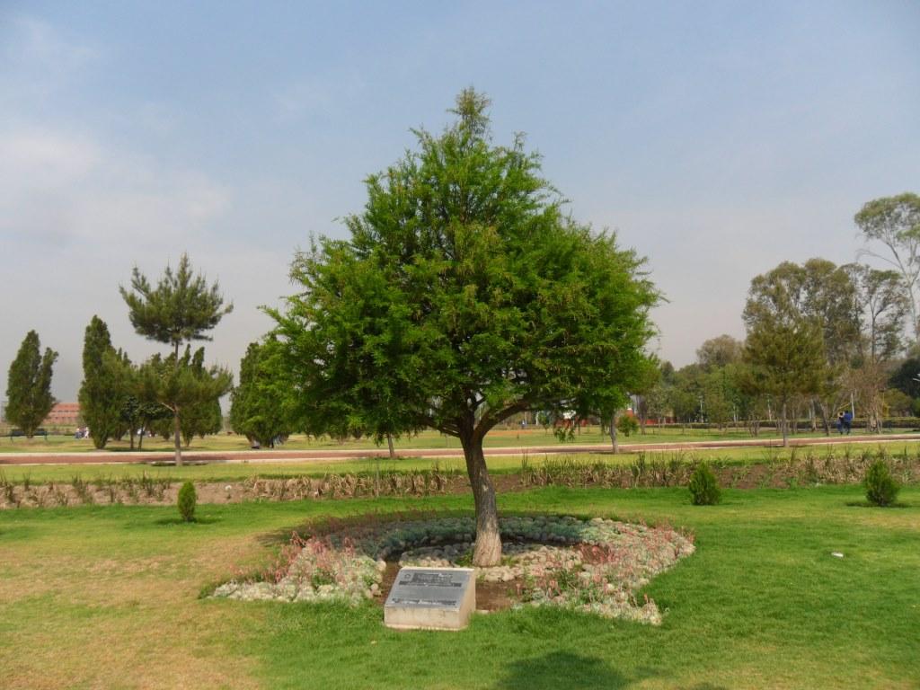 Jardines bicentenario secretar a de medio ambiente y for Arbol de fuego jardin