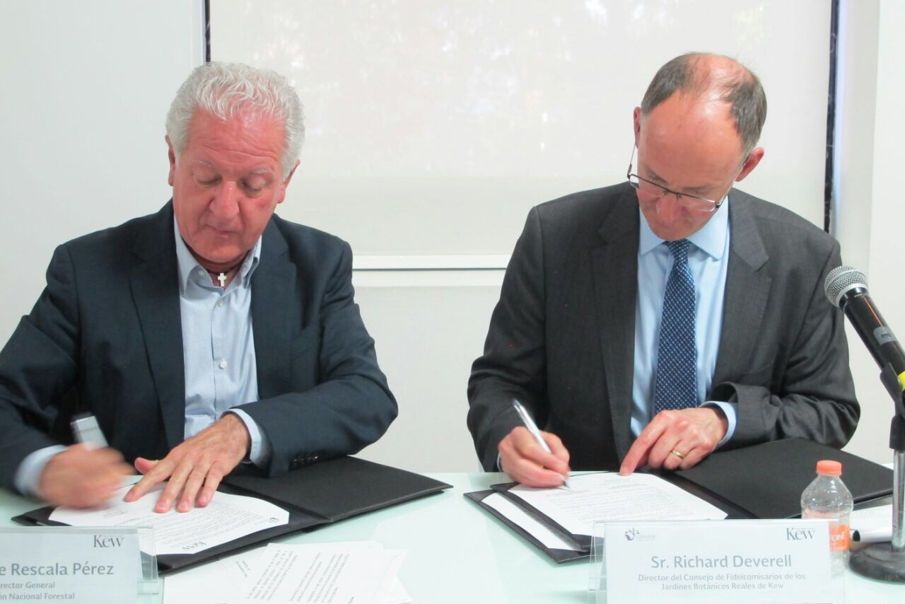 Colabora conafor con organizaci n brit nica experta en for Viveros forestales conafor
