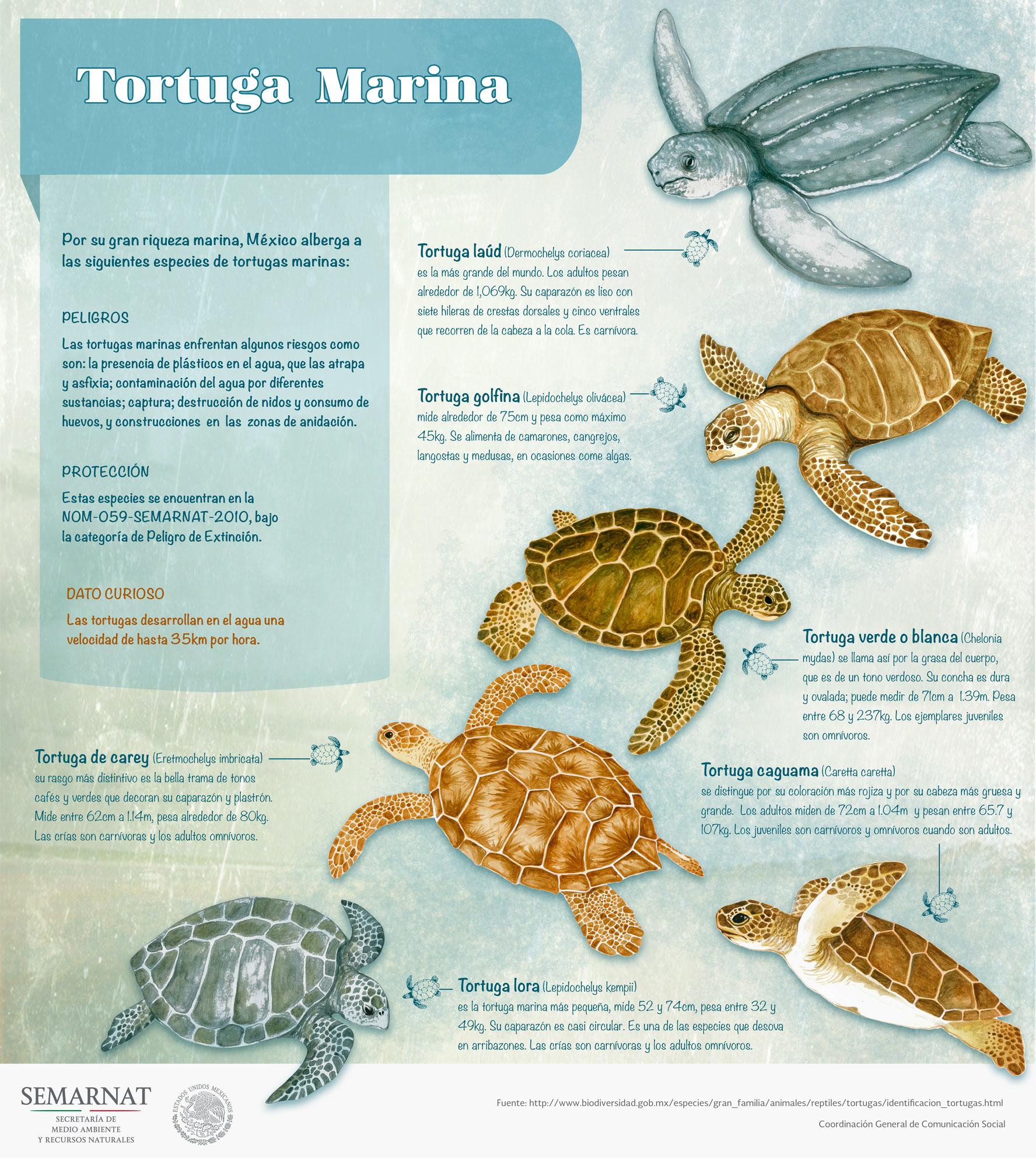 /cms/uploads/image/file/271135/TortugasMarinas.jpeg
