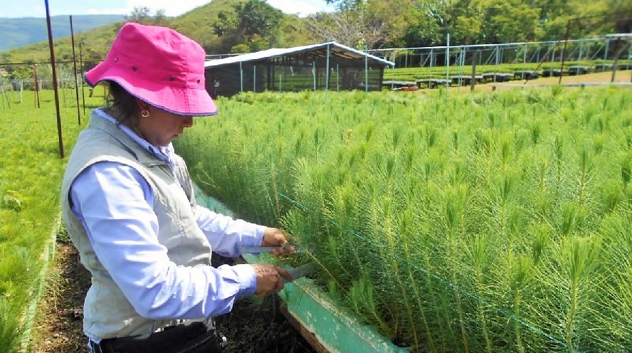 Asigna conafor 28 4 mdp para reforestaci n en guerrero for Viveros forestales conafor