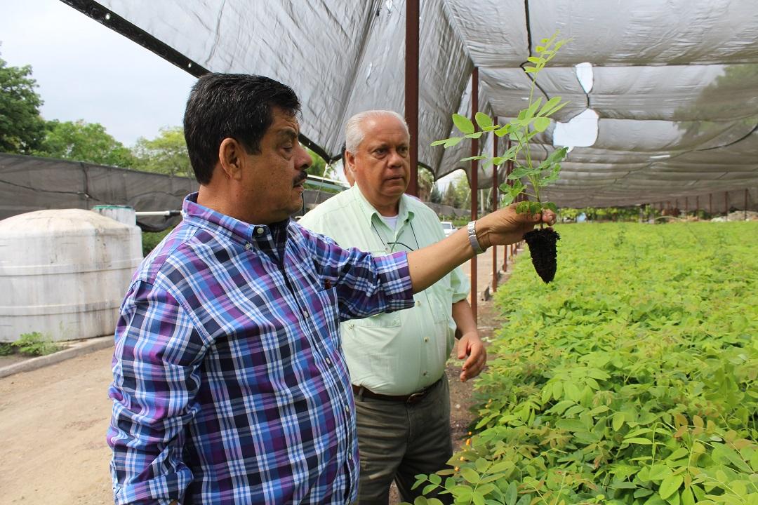Dispone colima de 1 3 millones de plantas para for Viveros en colima