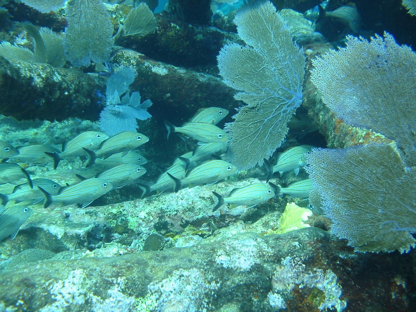 /cms/uploads/image/file/320567/Ecosistemas_marinos2.jpg