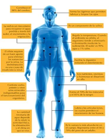 Cuanto azucar necesita el cuerpo humano al dia