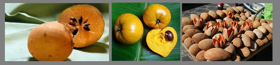 Zapote Fruta Tropical Típica De México Servicio De Información
