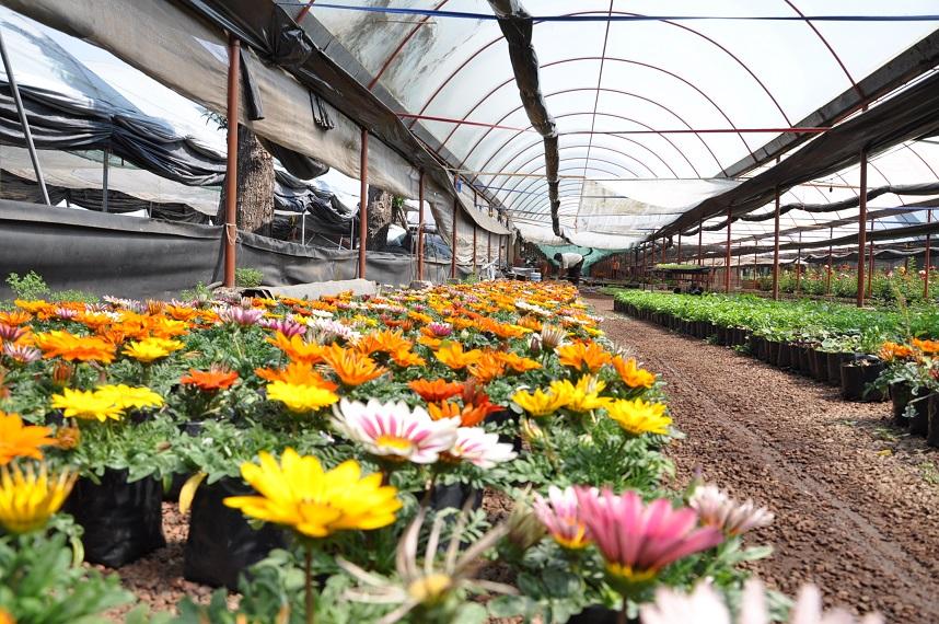 Producci n de plantas ornamentales en xochimilco for Produccion de plantas ornamentales