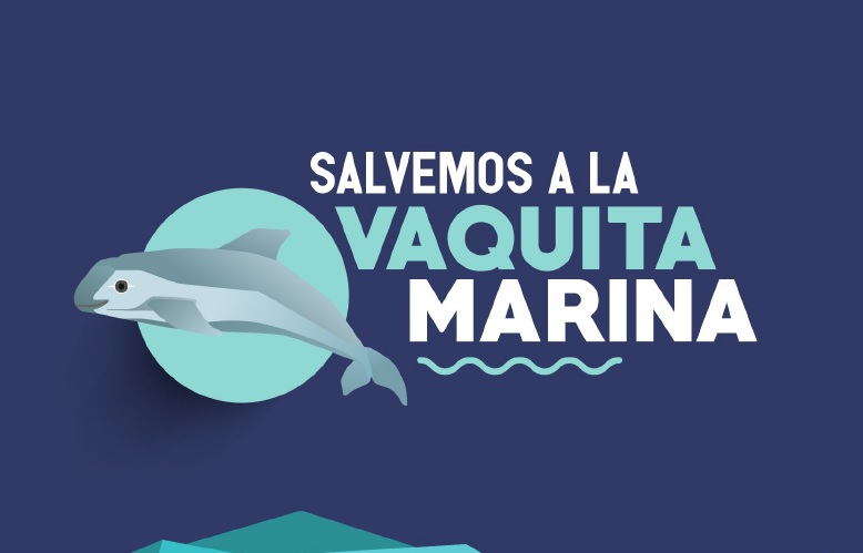 Resultado de imagen para logo de salvemos la vaquita marina