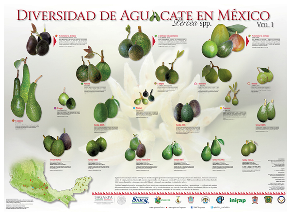 /cms/uploads/image/file/377644/poster-aguacate_web.jpg