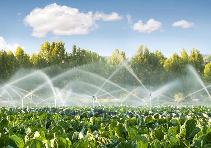 En la agricultura, los sistemas de riego son utilizados para un  aprovechamiento óptimo del agua.   Servicio de Información Agroalimentaria  y Pesquera   Gobierno   gob.mx