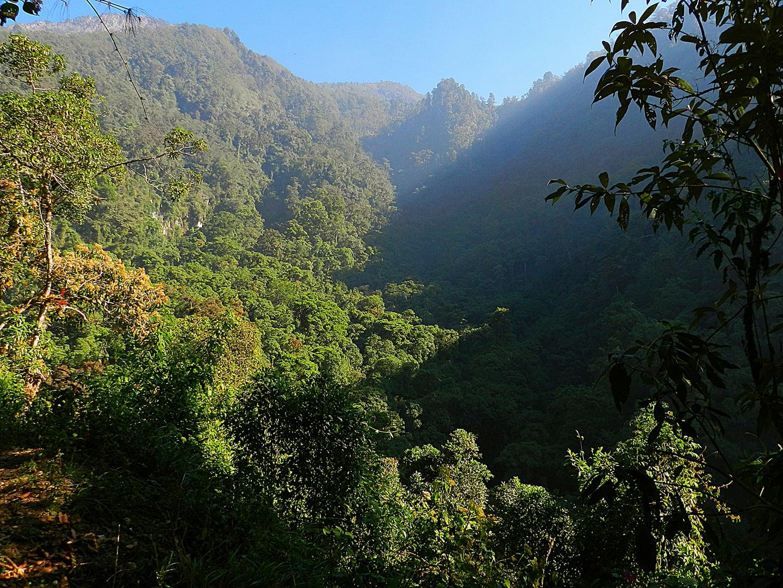 Vegetación en el volcán Tacaná.