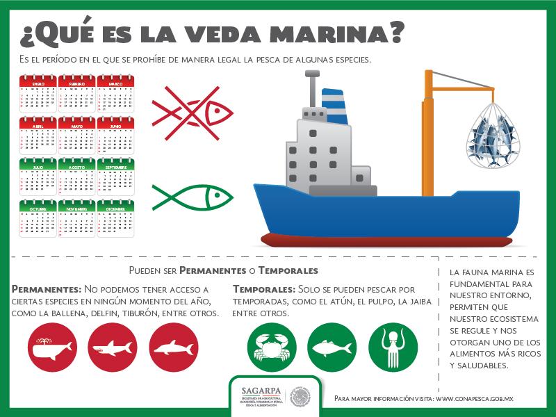 Infografia Veda Marinajpg