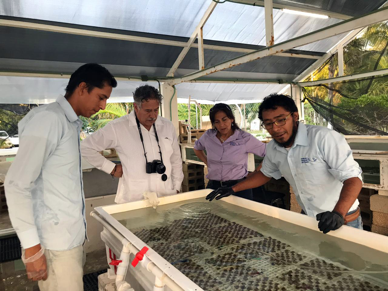 corales en laboratorio