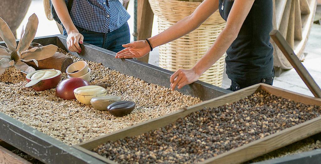 /cms/uploads/image/file/524264/Veracruz_Coatepec-fincas-cafetaleras-web.jpg